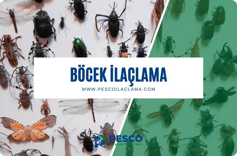 Pesco İlaçlama'nın böcek ilaçlama hizmetine ilişkin bilgilendirme yazısıdır.