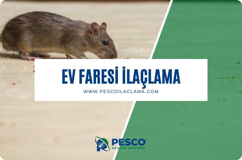 Pesco İlaçlama'nın ev faresi ilaçlama hizmetine ilişkin bilgilendirme yazısıdır.