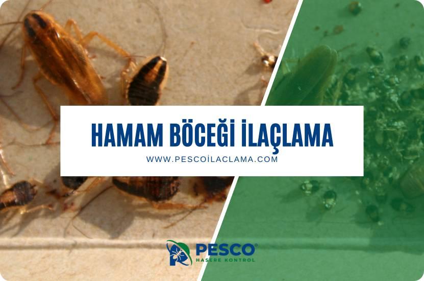 Pesco İlaçlama'nın hamam böceği ilaçlama hizmetine ilişkin bilgilendirme yazısıdır.