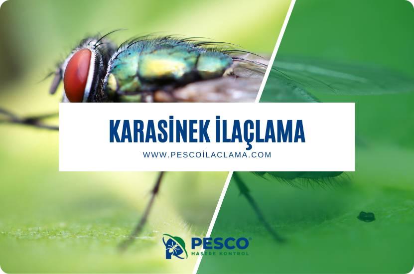 Pesco İlaçlama'nın karasinek ilaçlama hizmetine ilişkin bilgilendirme yazısıdır.