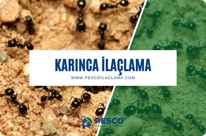 Pesco İlaçlama'nın karınca ilaçlama hizmetine ilişkin bilgilendirme yazısıdır.
