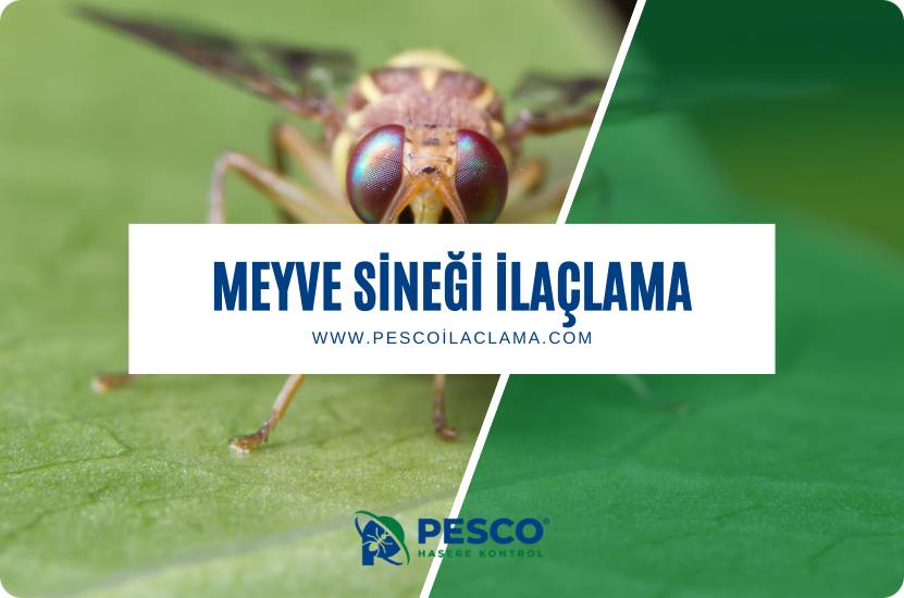 Pesco İlaçlama'nın meyve sineği ilaçlama hizmetine ilişkin bilgilendirme yazısıdır.
