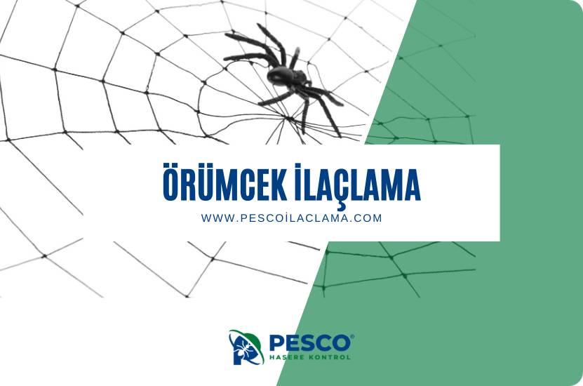 Pesco İlaçlama'nın örümcek ilaçlama hizmetine ilişkin bilgilendirme yazısıdır.
