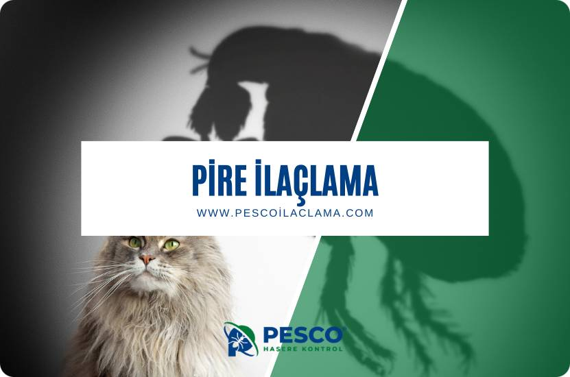 Pesco İlaçlama'nın pire ilaçlama hizmetine ilişkin bilgilendirme yazısıdır.