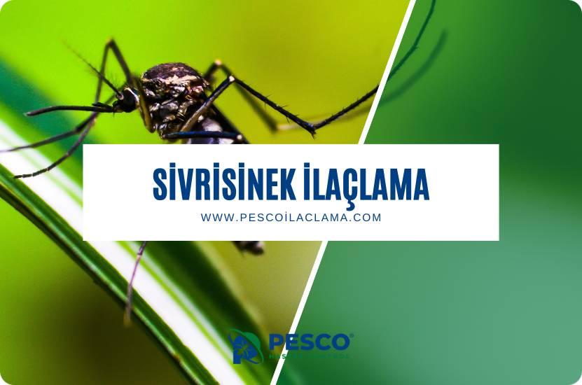 Pesco İlaçlama'nın sivrisinek ilaçlama hizmetine ilişkin bilgilendirme yazısıdır.